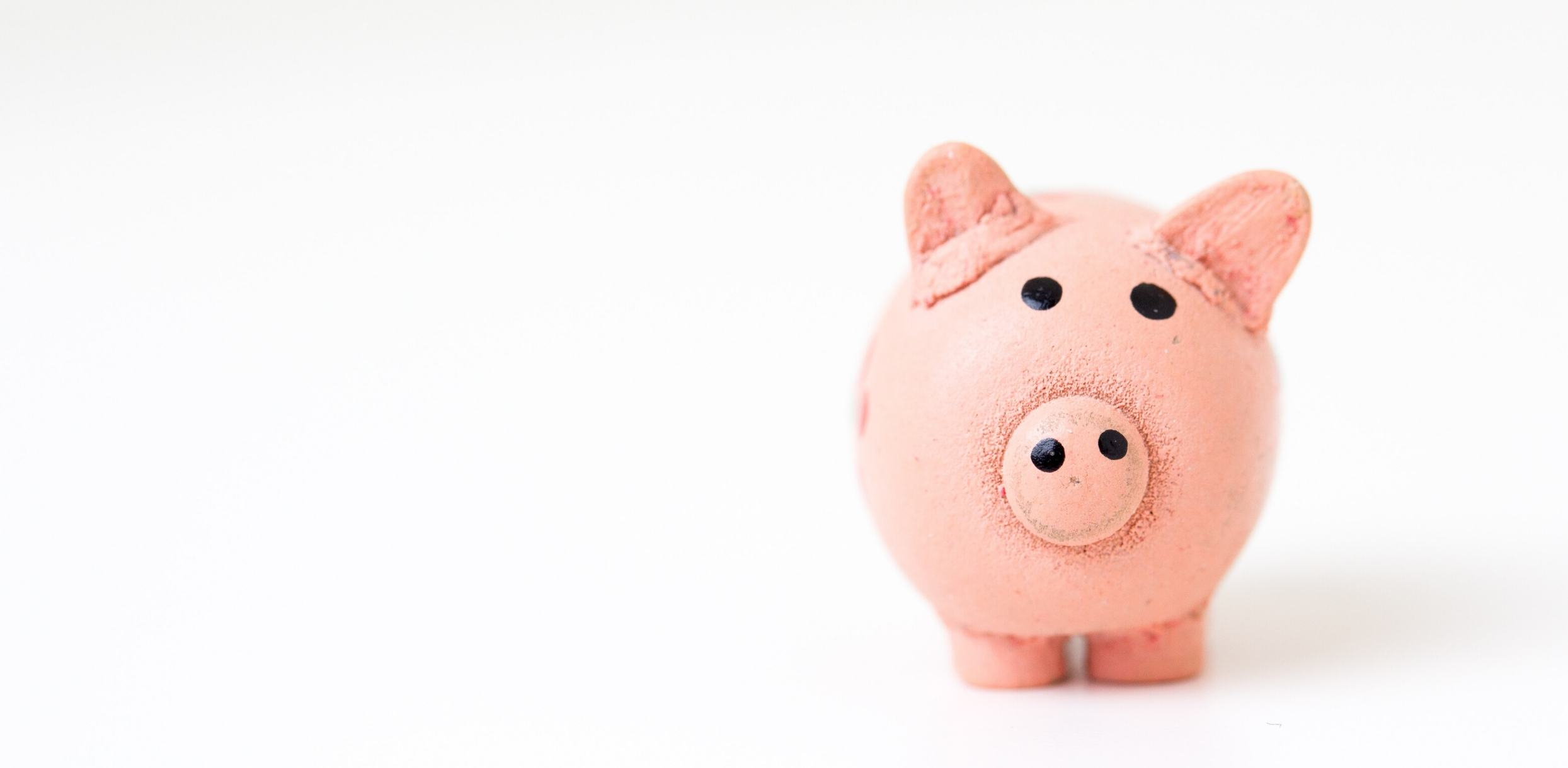 a piggybank pig